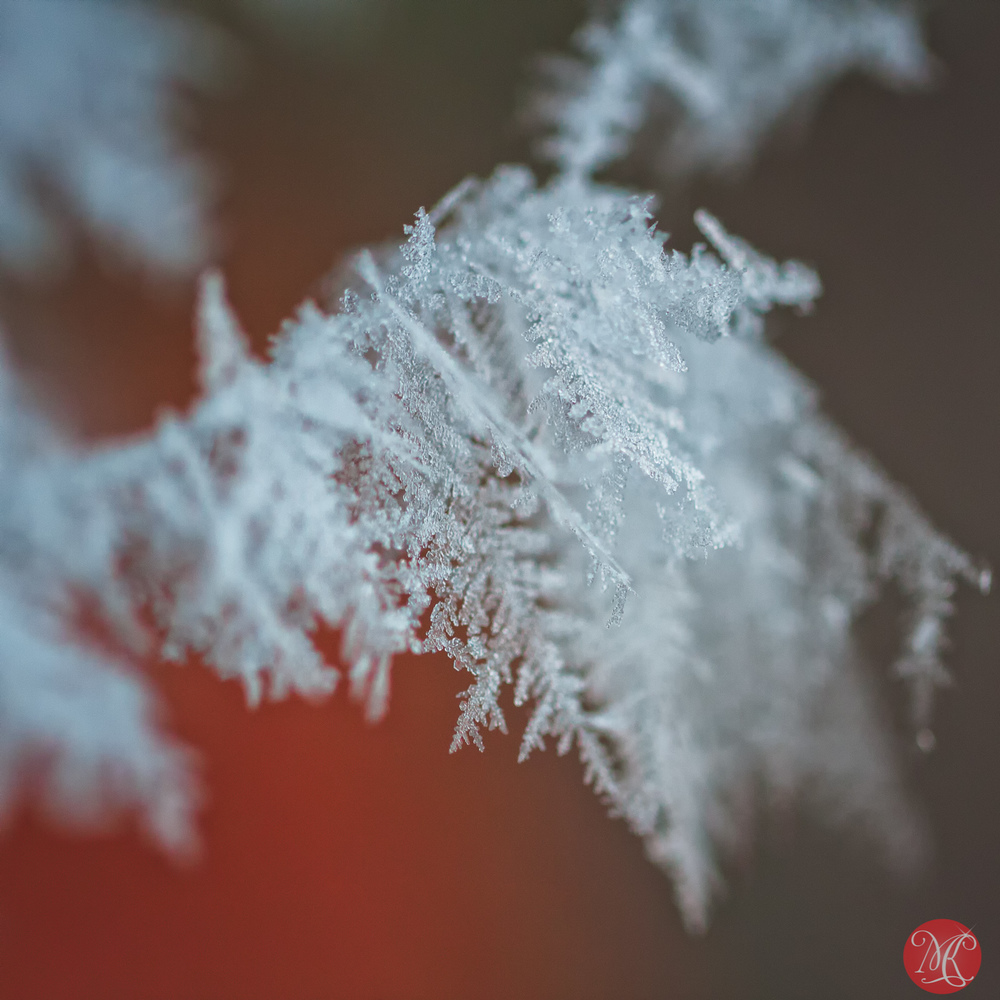 Snow and ice - Macro Photography