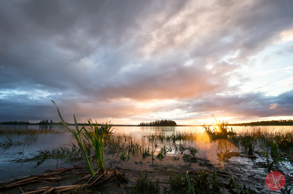 Elk Island Summer - Landscape Photography