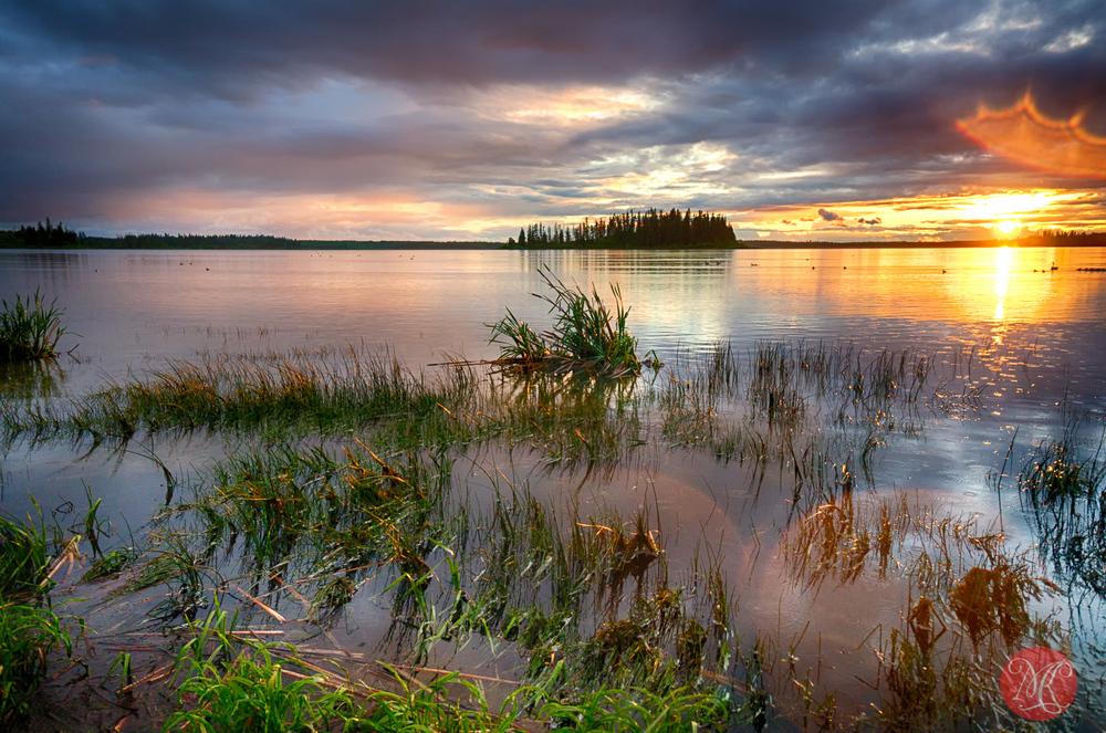 Elk Island Summer - Landscape Photography