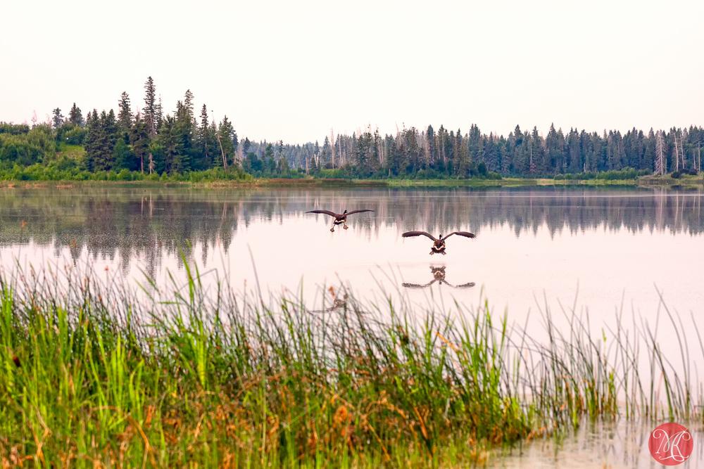 Elk Island - Summer