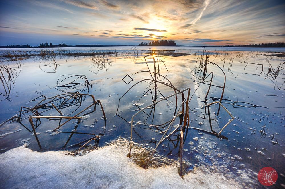 Elk Island - Spring