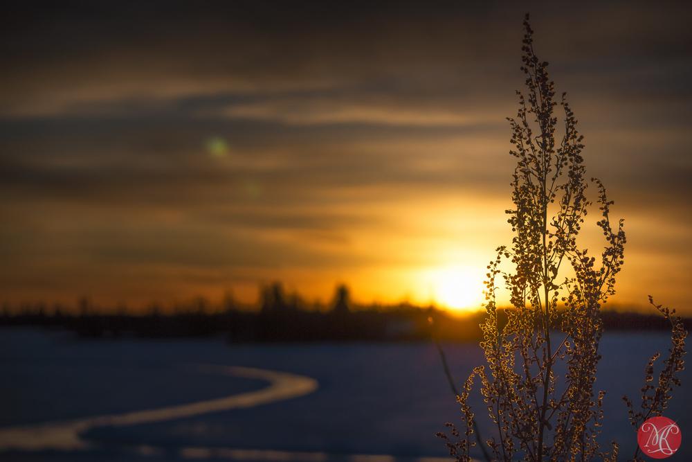 Winter at Elk Island