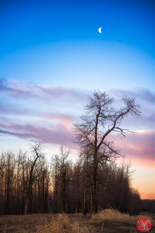 Sunrise at Elk Island