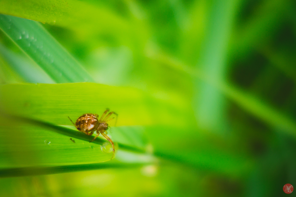Spider on green leaf in the morning dew