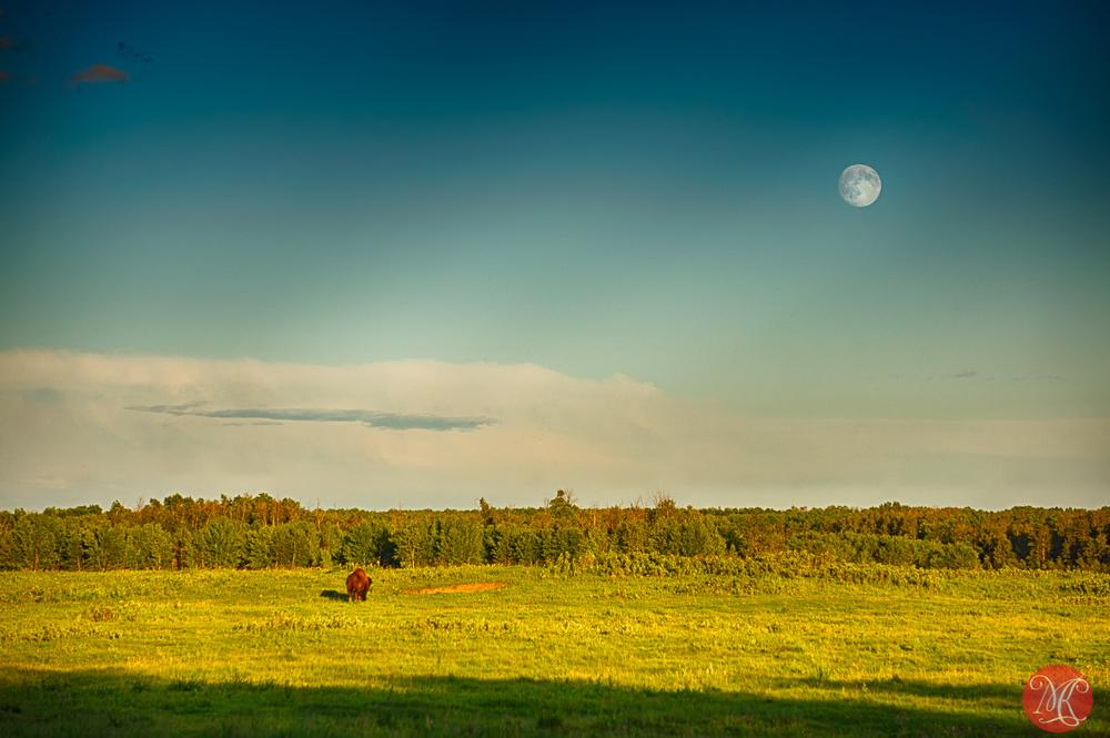 Elk Island landscape