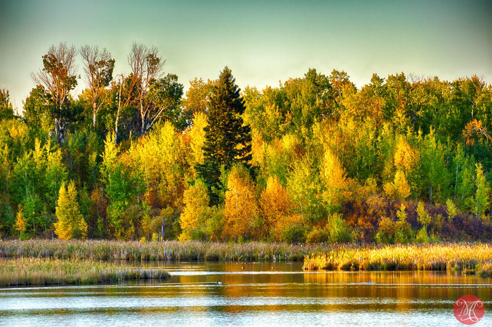 Fall at Elk Island