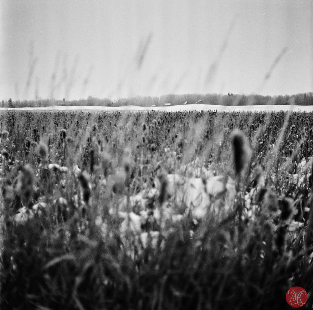 Alberta prairie in winter with film