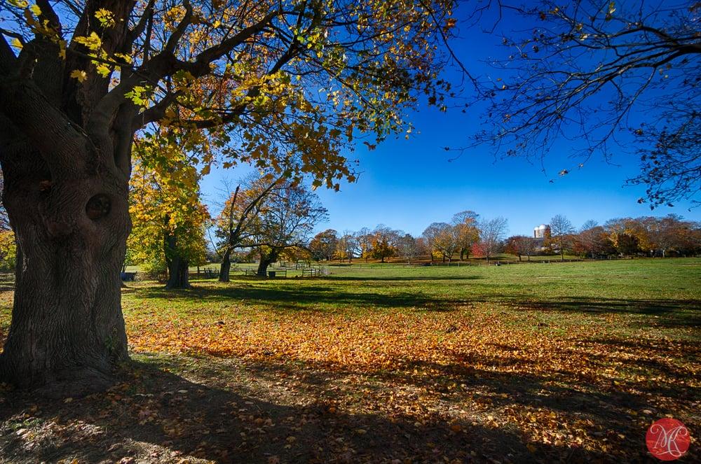 Fall on Long Island