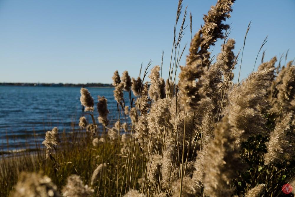 Lake Shore in fall on Long Island
