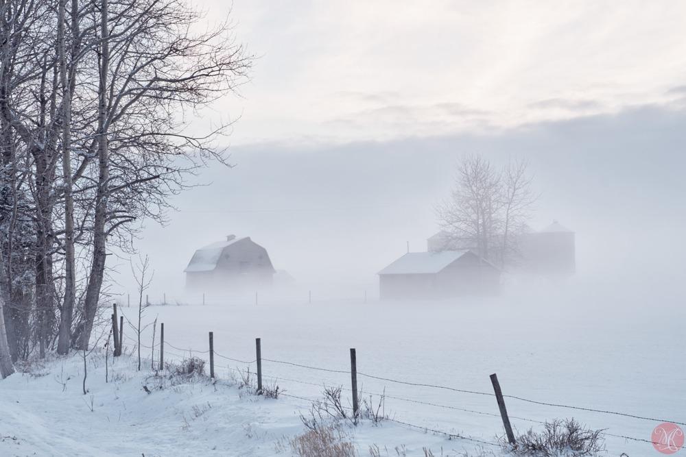 fog winter alberta farm