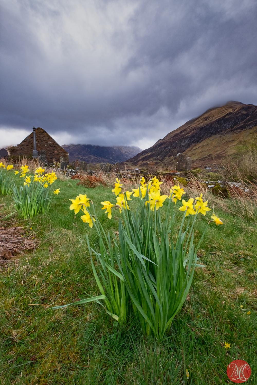 Spring in Scotland 4