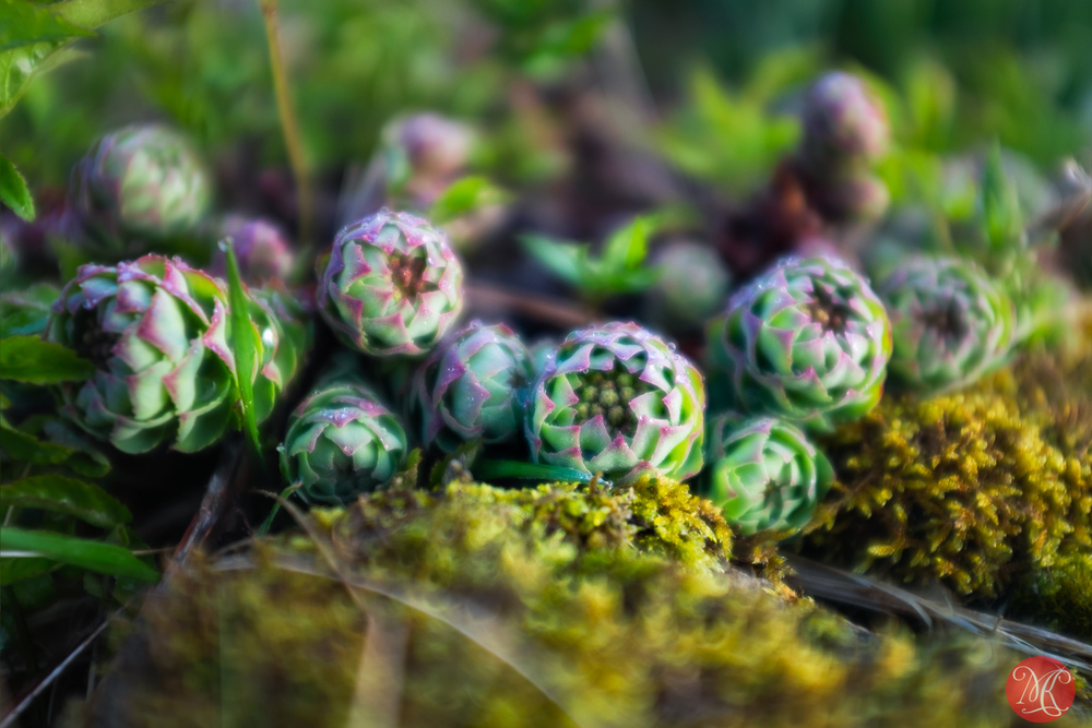 Little plants on Skye 1