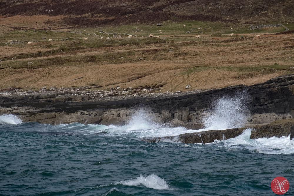 Sheep and waves