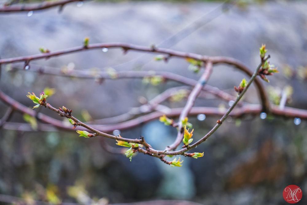 Spring on Lewis 2