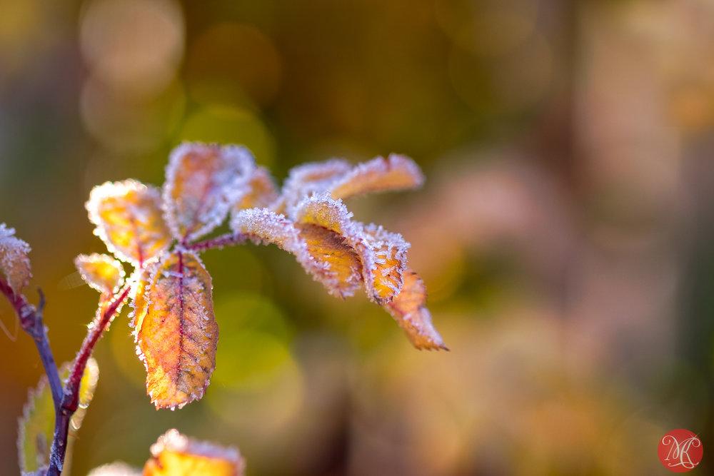 Killer frost 3