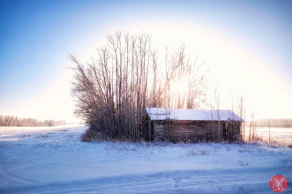 Beautiful winter on the prairies 2