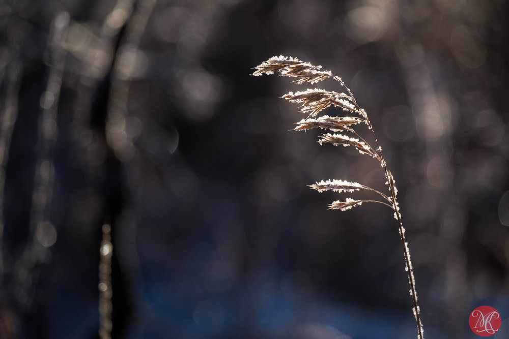 Sugared grass