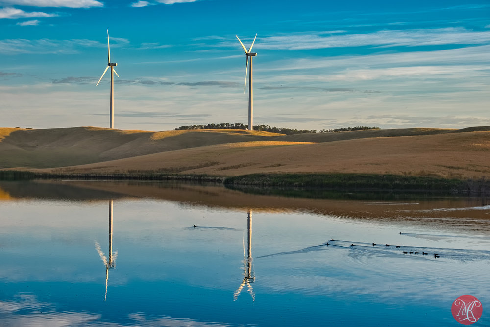 Wind turbines and ducks