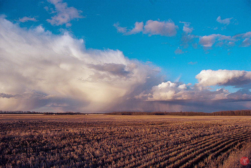 spring storms on the alberta prairies.