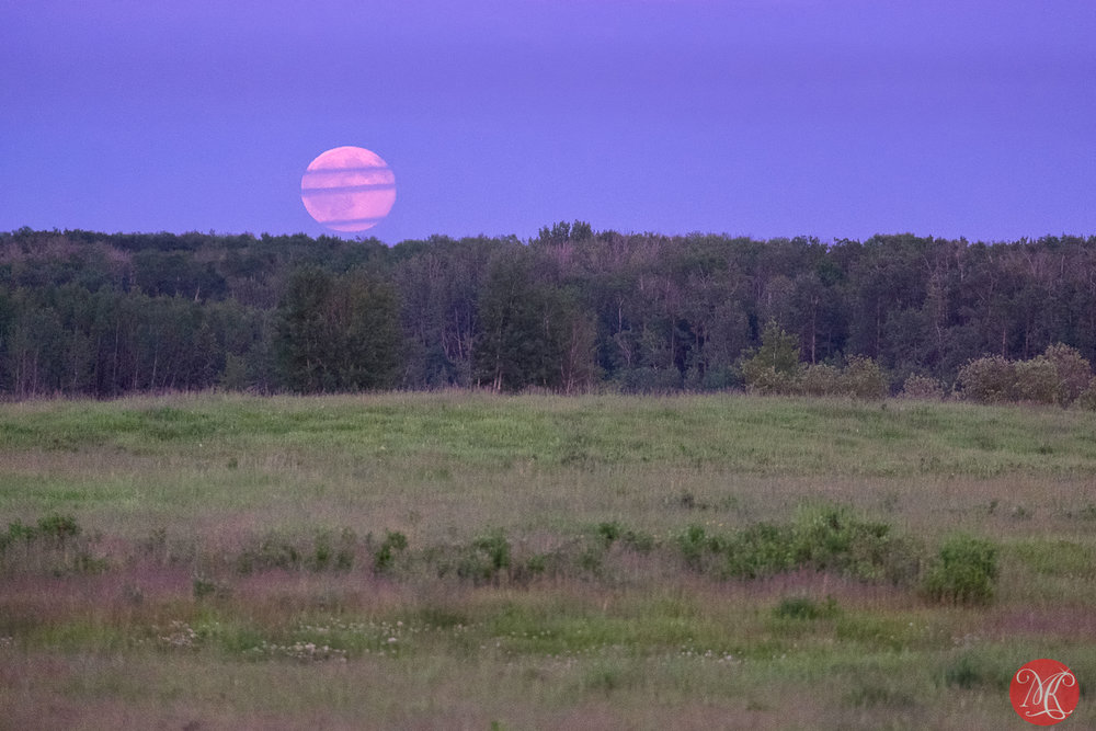 And the Strawberry Moon is rising..