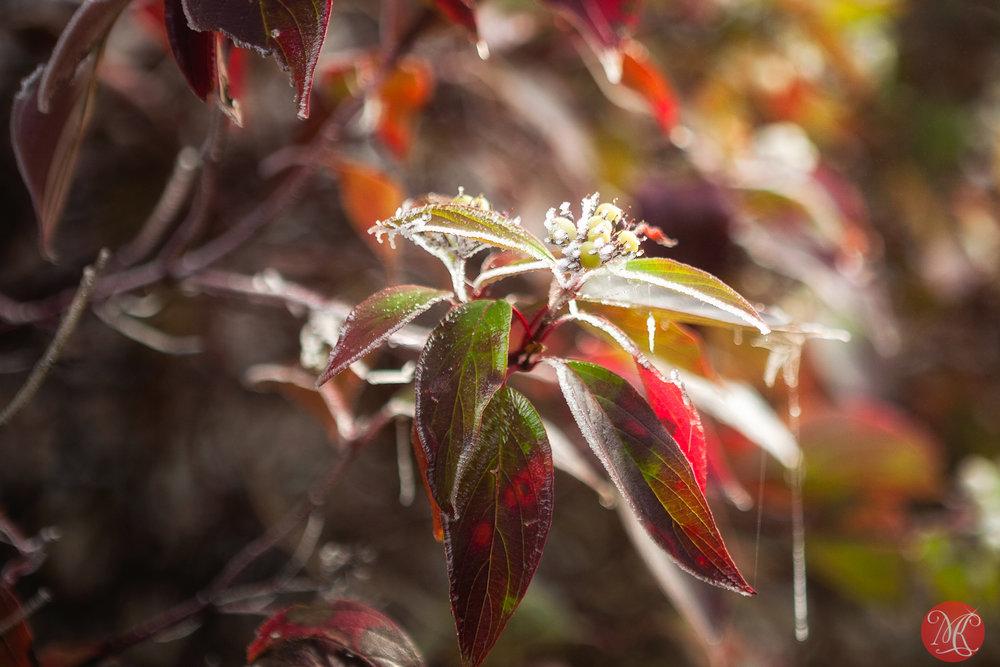Autumns past .. 3
