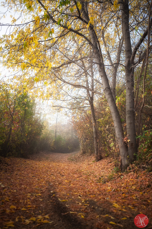Autumns past .. 2
