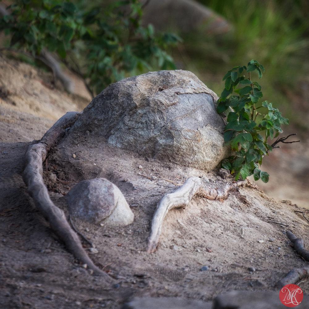 Rock hugger