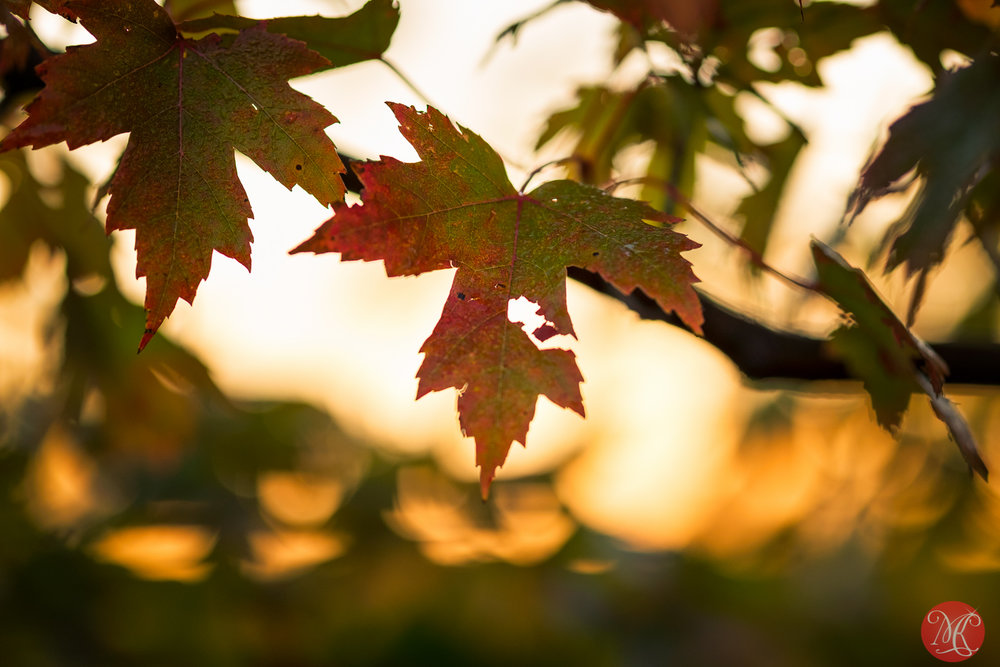 Fall in Canada..