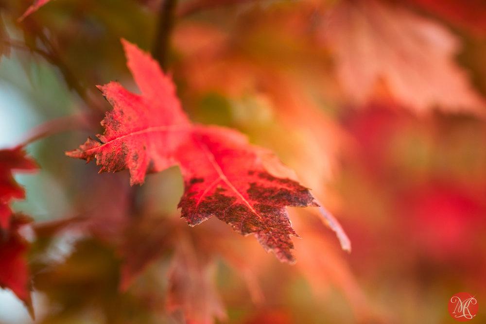 Fall in Canada.. 2