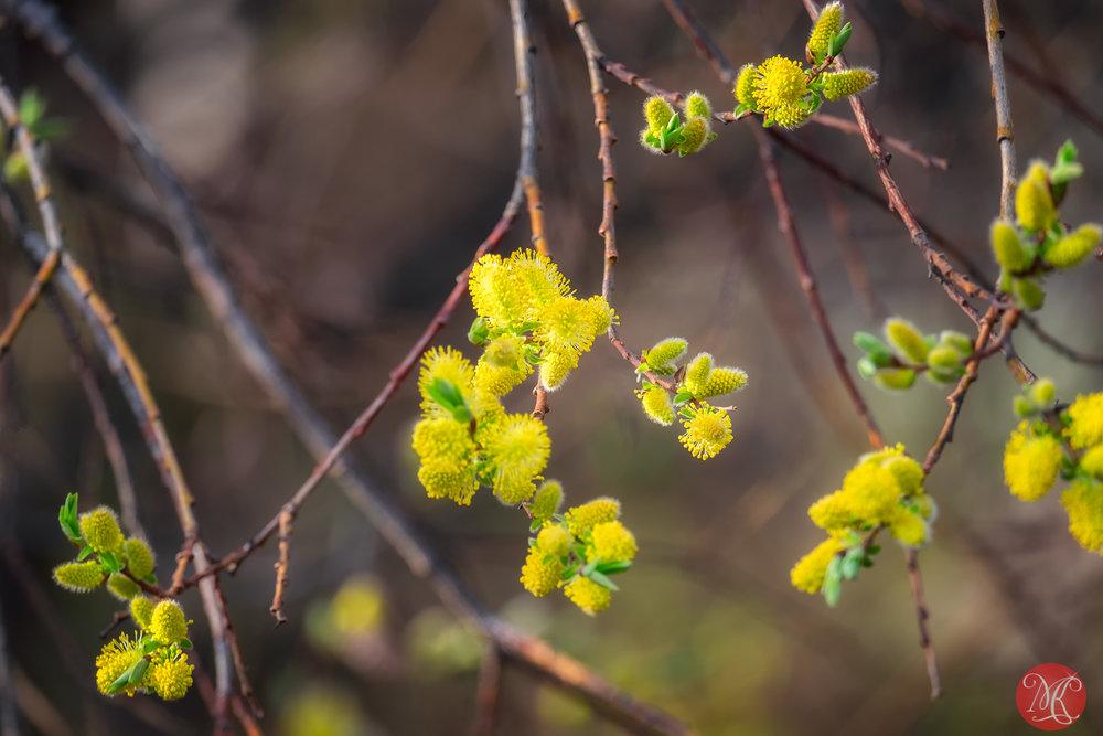 Spring magic 4