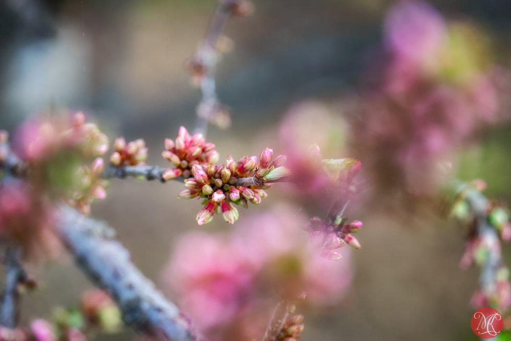 Spring magic 5