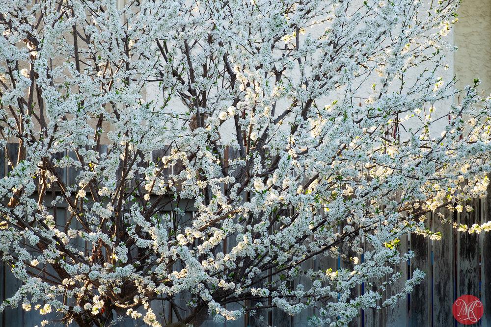 Spring magic 6