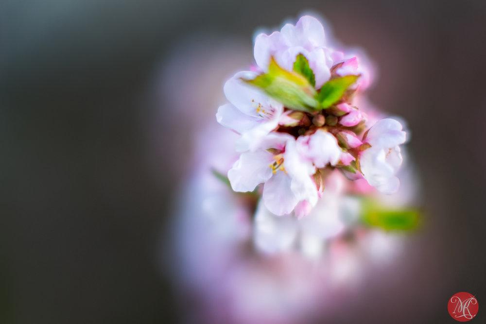 Spring magic 14