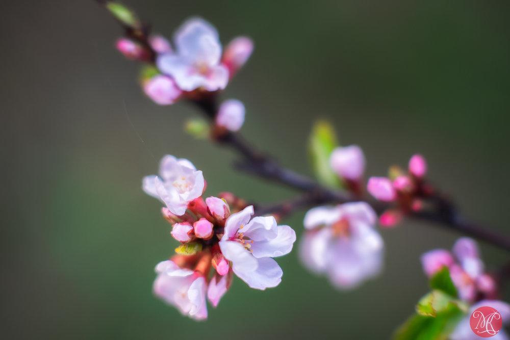 Spring magic 15