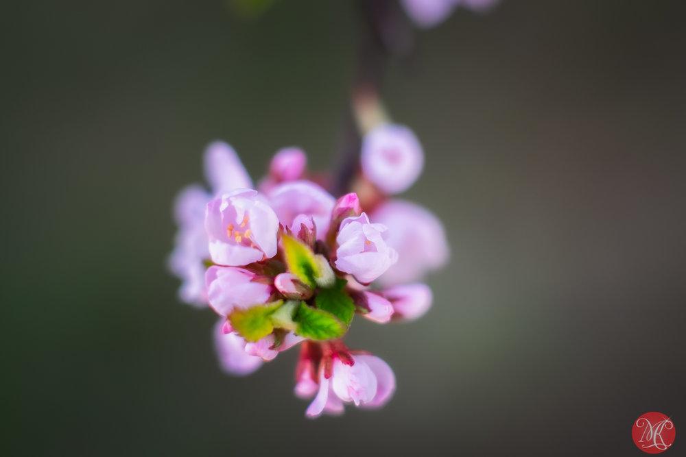 Spring magic 21
