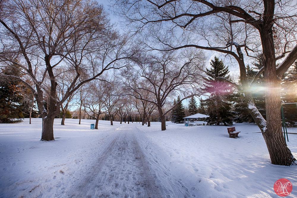 Morning at the park 1