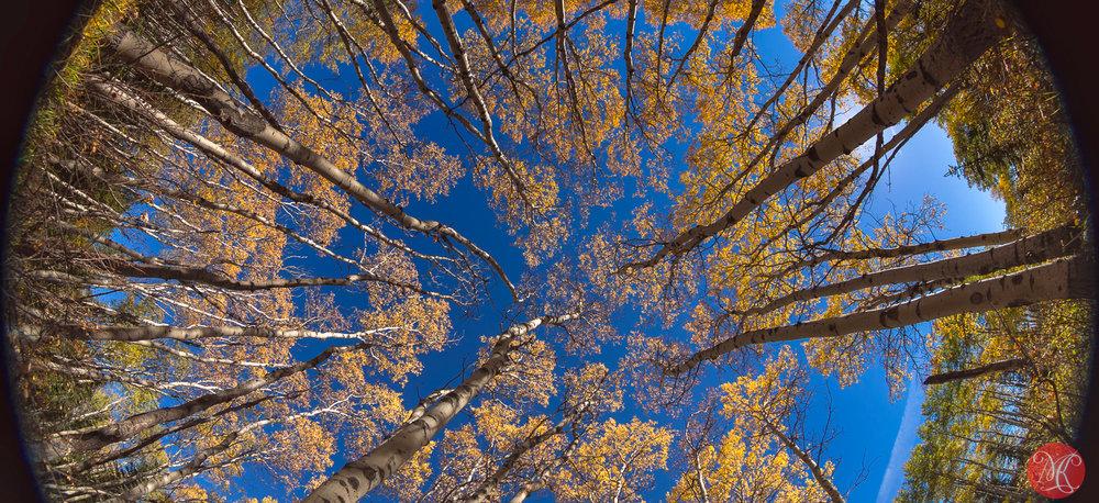 Fall in Jasper 10