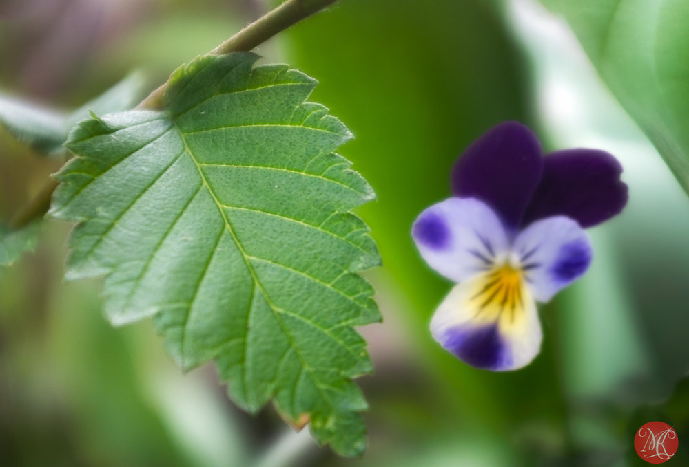 Foliage of spring