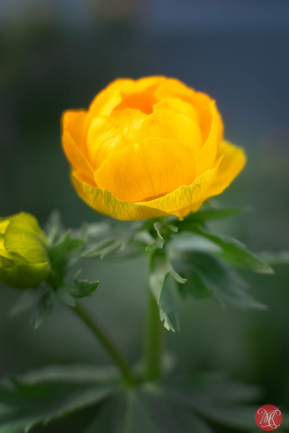 As warm as yellow can be
