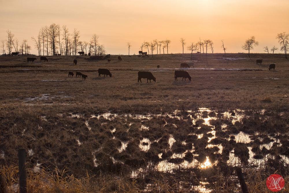 Peaceful grazing