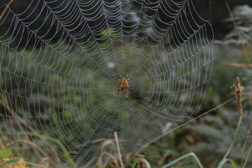 web, spider, photography, canon, canon 6d, portrait, landscape, dslr, photo, photos, go pro, video, photographer, fuji, leica