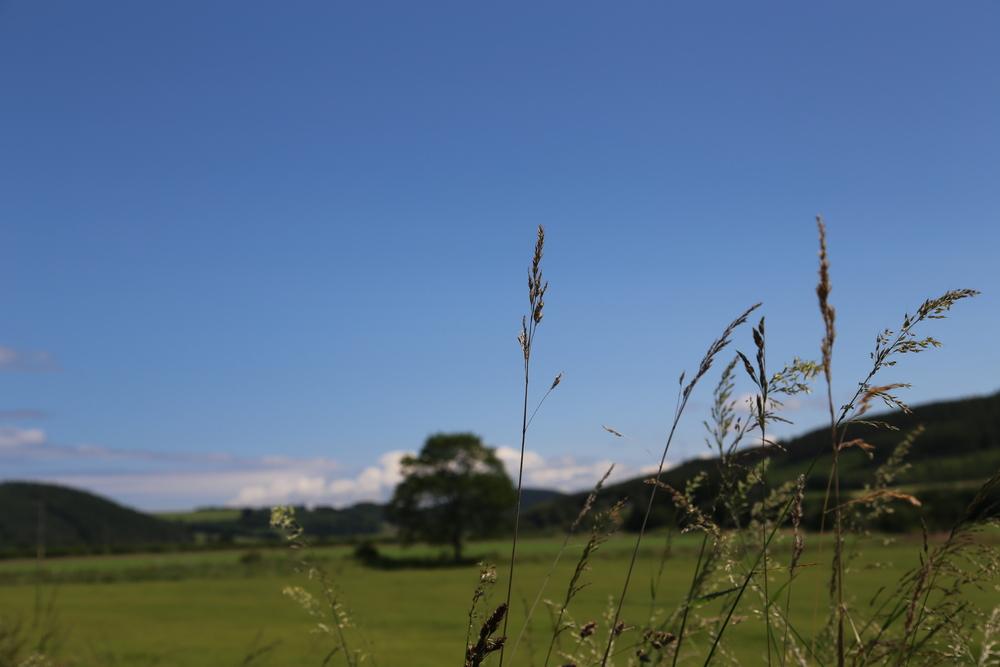 landscape, photography, canon, canon 6d, field