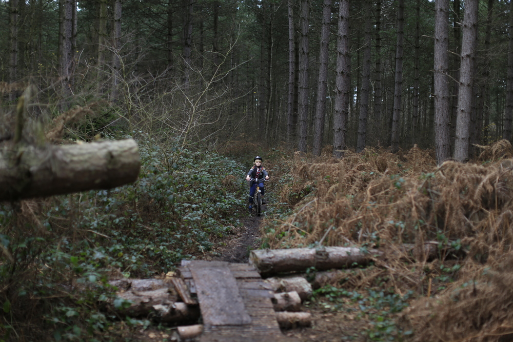 singletrack, woods, biking, mountain biking, cycling, photography, canon, canon 6d