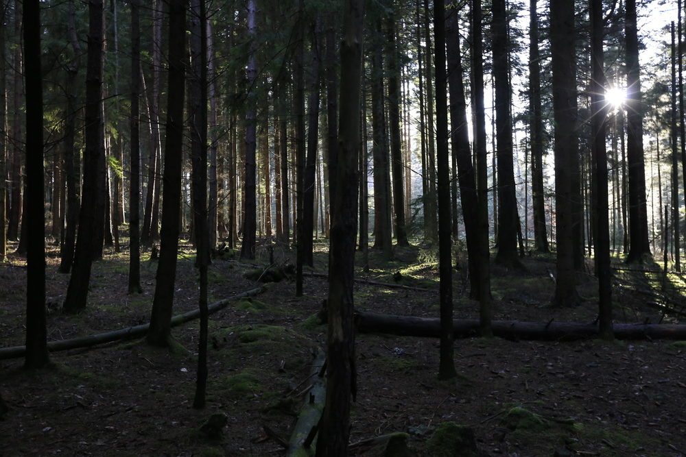 There was something truly enchanting about the Black Forest.
