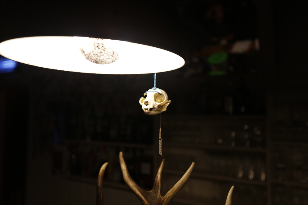 skull, skull, bar, art, arty, fun, bar, cool bar, travel blog, photography, bicycle touring apocalypse, bikepacking, bikepacking blog, travel, horns, antlers,