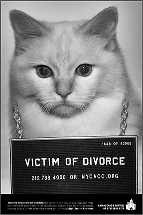 ACCNYC_divorce_430.jpg