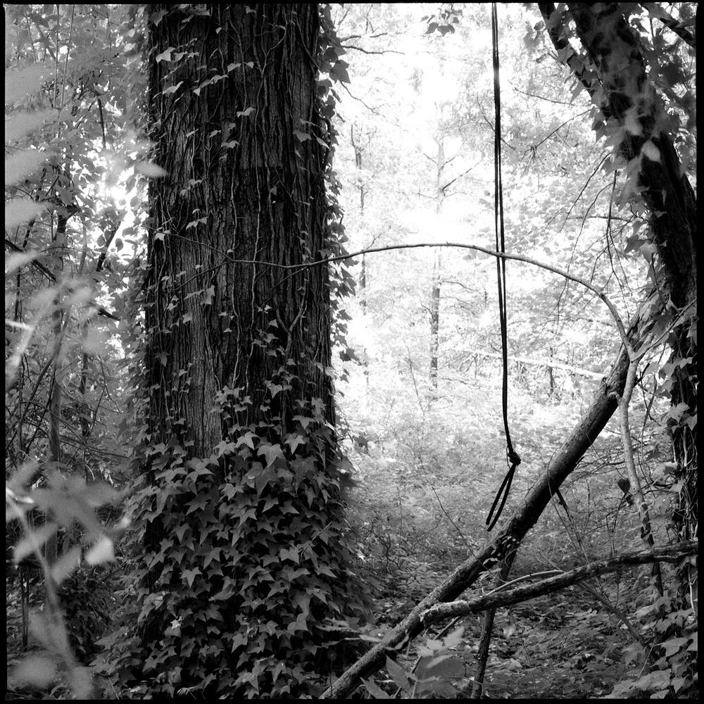 IR-woods.jpg