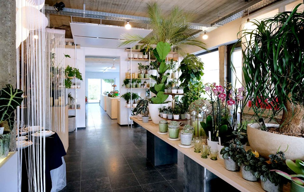 Urban jungle store - Degrootebloemen.be