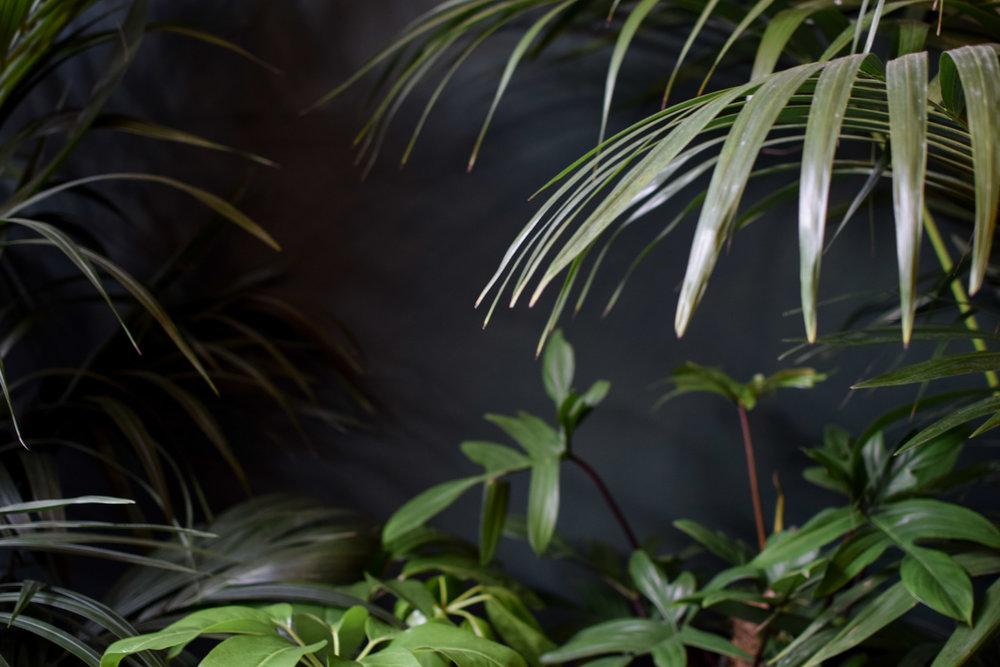 Junglefever-21.jpg