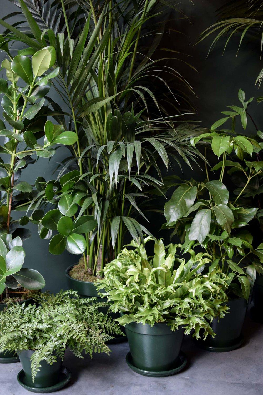 Junglefever-3.jpg